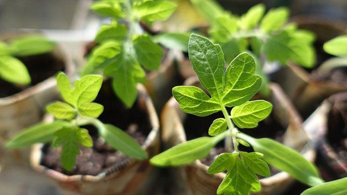 Dlaczego warto posiadać i dbać o własny ogród