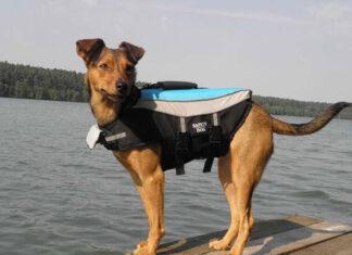 Kamizelka do pływania dla psa